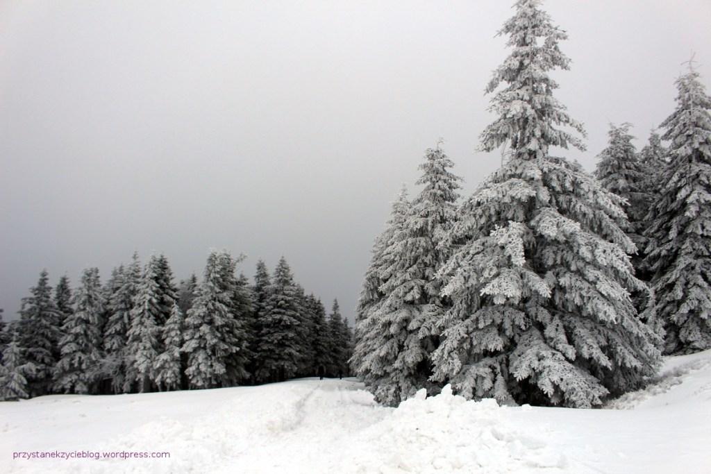 schronisko pod snieznikiem4
