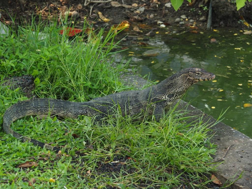Park Lumphini, 10 najciekawszych atrakcji Bangkoku, czyli 2 dni w tajskiej stolicy, Bangkok, Tajlandia