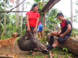 Wild pig, Wantaro, Ekwador