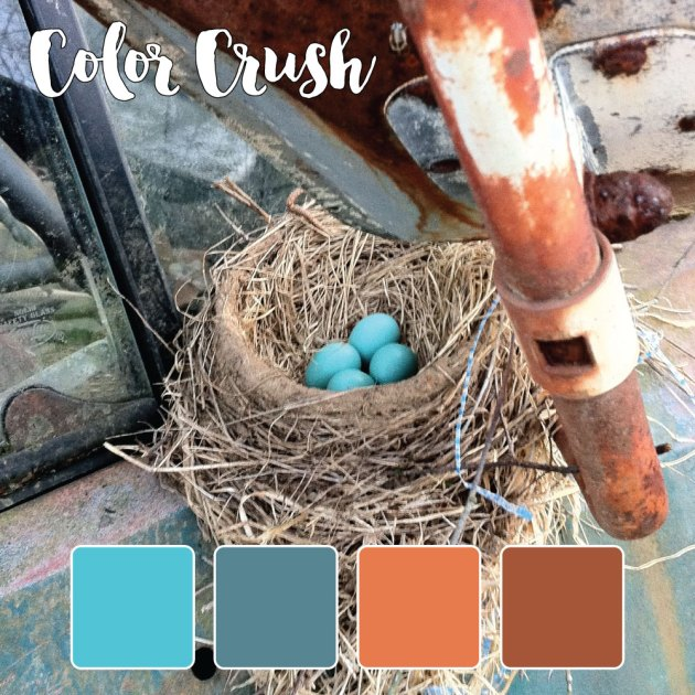 color_crush_8-5-15_birdnest