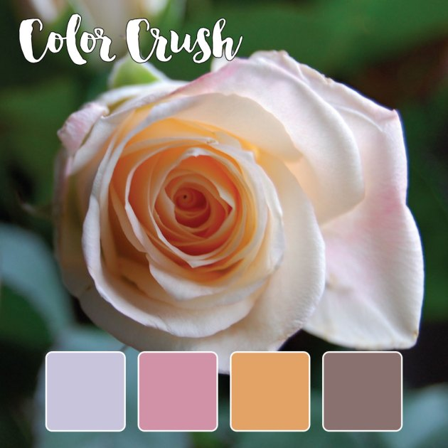 color_crush_9-16-15_rose