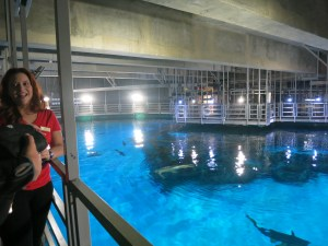 That's Janna, our handler on the left. That's a bored shark on the lower right. You can almost see him yawning.