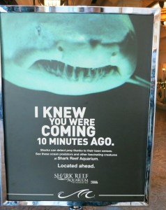 shark marketing