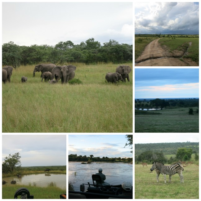 Sabi Sands Collage