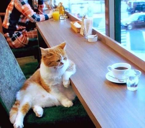 post-vacation-cat