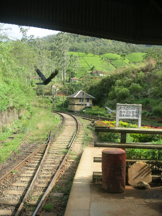 Nanu Oya station in Sri Lanka