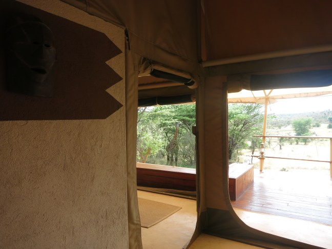 Mara Busthops giraffe Harry through our Leopard tent doorway