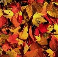 feuilles-mortes