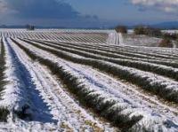 Le plateau sous la neige