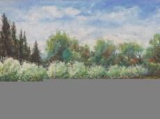heralbert-paysage-de-provence