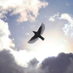 free-as-a-bird-r10151-4