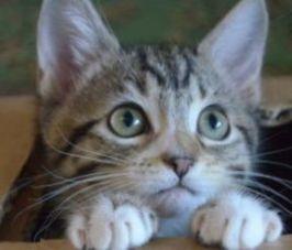chat-curieux