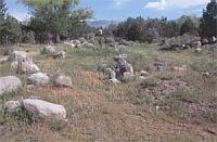 Mallow field
