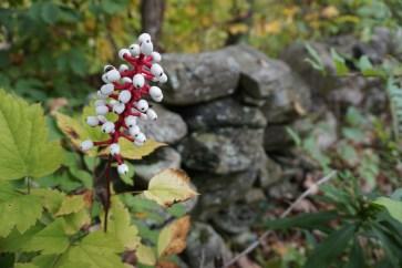 1920-white-berries