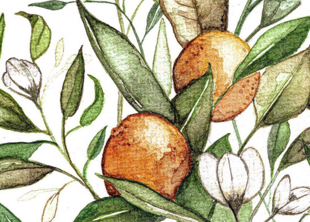 watercolour_oranges