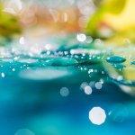 Développement personnel ou voie spirituelle : choisir entre briller ou s'unifier [3]