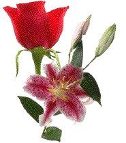 roselys