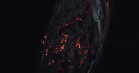 Floresta4