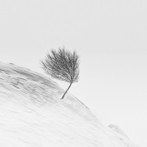 Snowscapes-Photography-4