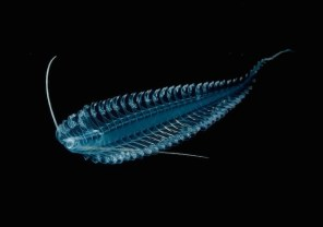 Glowing-Creatures-in-Black-Water-14