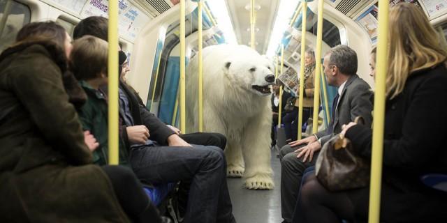 Polar-Bear-in-London5