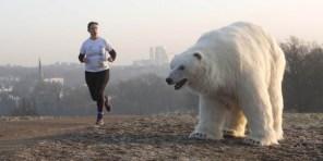 Polar-Bear-in-London6