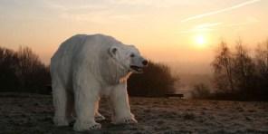 Polar-Bear-in-London8