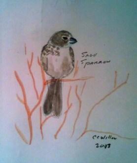 Sage Sparrow colored pencil