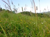Mountain's meadow