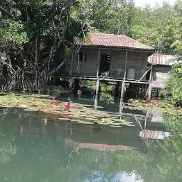 Jardín de agua en Río Dulce
