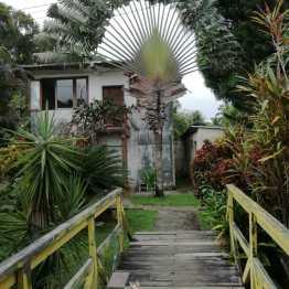 Casa y palmera en Río Dulce