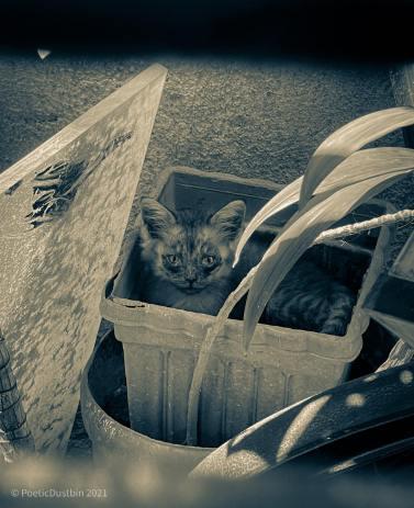 Our kitten in a pot - poetic dustbin