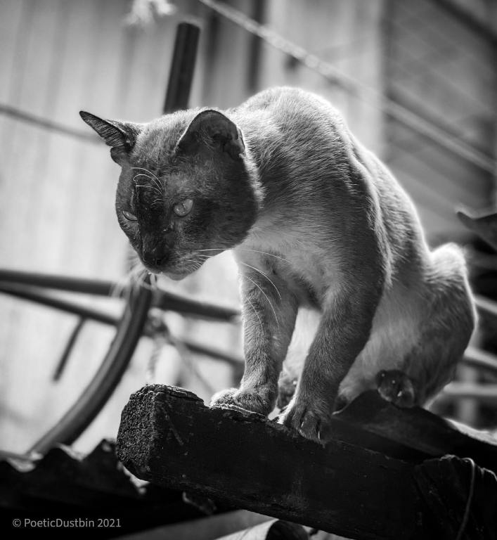 King-of-cats-poetic-dustbin