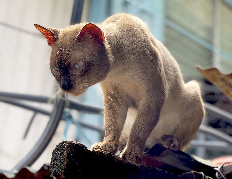 Tenten - King of Cats - Poetic Dustbin