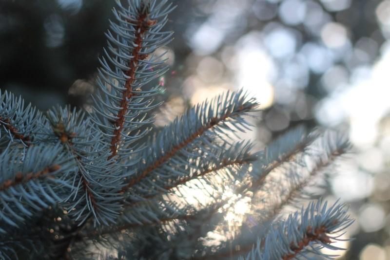Pine Close