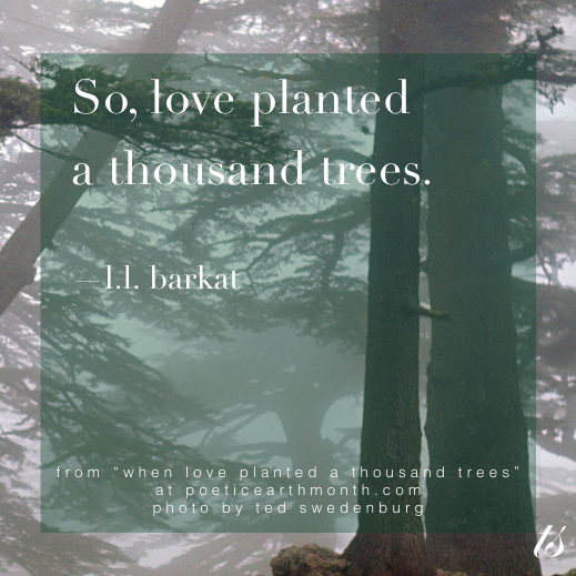 So Love Planted a Thousand Trees Mark and Claire Haidar Legacy
