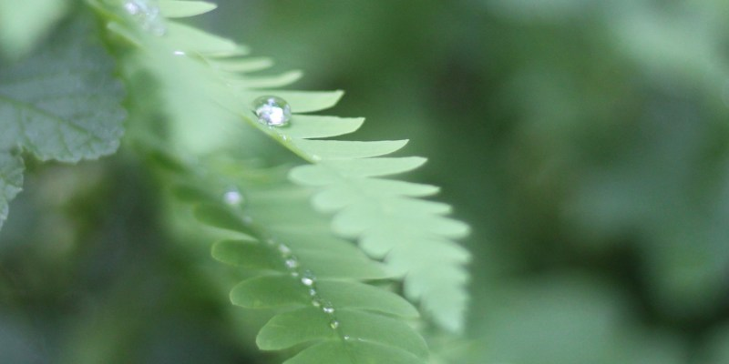 Fern-Single Raindrop Peaceful by L.L. Barkat