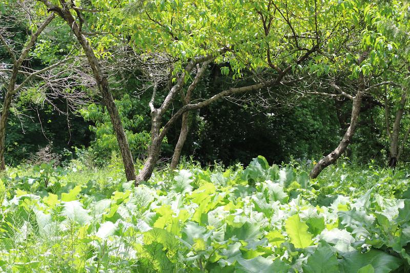 Peach Grove Fairyland