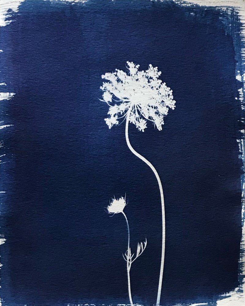 swyers queen anns lace cyanotype print