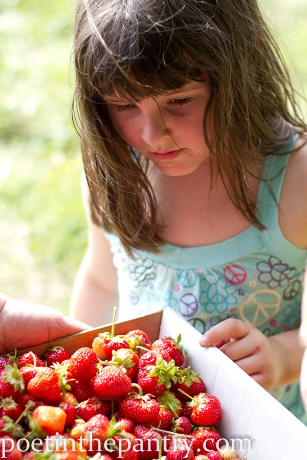 looking over the strawberries we picked