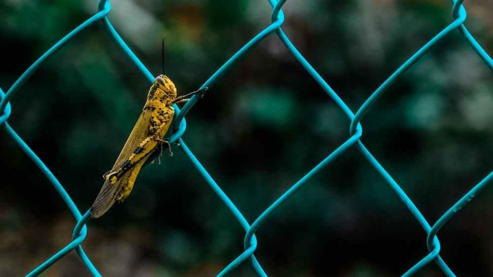 yellow insects close up hd wallpaper