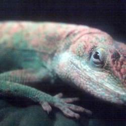 Lizard Lounge Poetry Jam