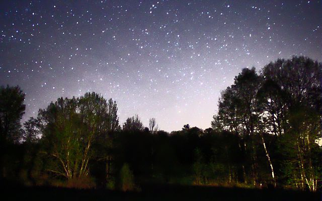 640px-Night_Sky_Stars_Trees_01