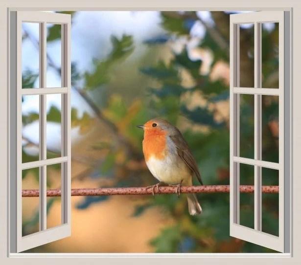 bird-at-the-window