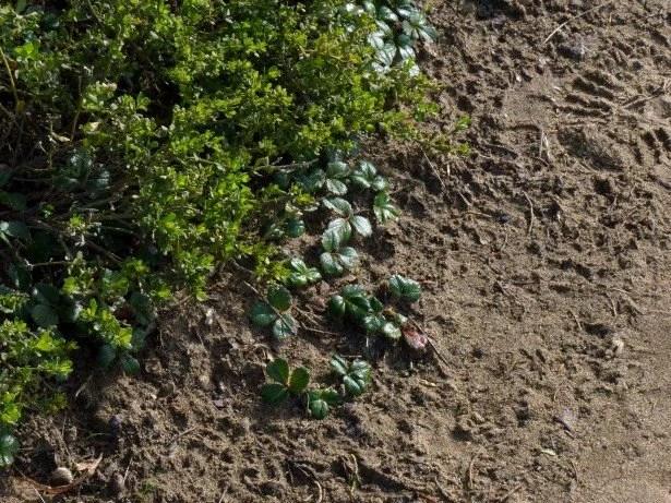 garden-plants-and-dirt