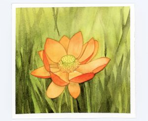 Waterlily watercolor and ink in orange