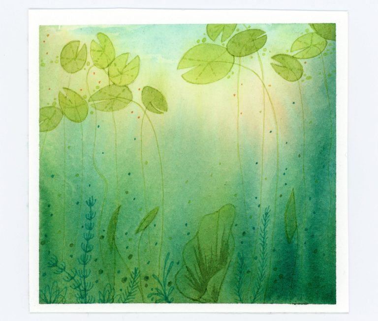 water lilies underwater view in watercolor and ink
