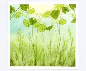 Lily pads underwater in watercolor and ink