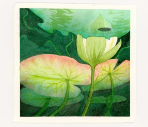 Underwater view of waterlily bud and lily pads--watercolor and ink illustration