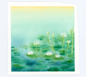 Waterlilies watercolor illustration